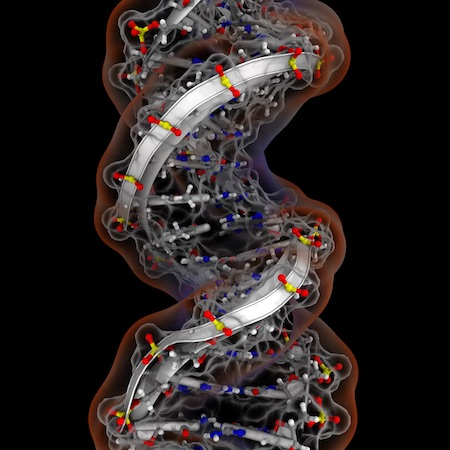 Molecular Dynamics Analysis of Ion Distributions Around a DNA strand