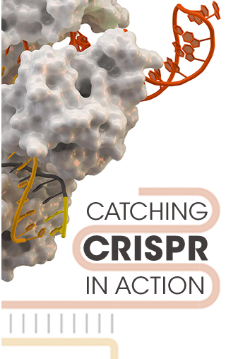 CATCHING CRISPR IN ACTION