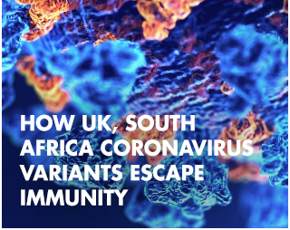 How UK, South Africa Coronavirus Variants Escape Immunity