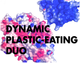 SUPERCOMPUTERS HELP REVEAL DYNAMIC PLASTIC-EATING DUO